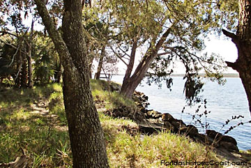 Nature area along the Intracoastal Waterway